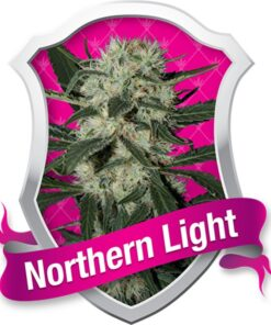 Northern Lights Feminized Seeds Royal Queen Seeds